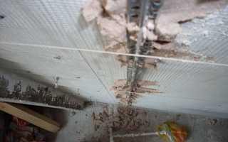 Какой слой штукатурки можно наносить на стену, потолок из гипсокартона — минимальная и максимальная толщина