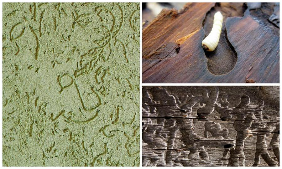 сравнение рисунка жуку и штукатурки короед